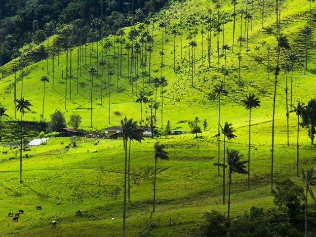 Passeio pelo Vale Cocora na Colômbia