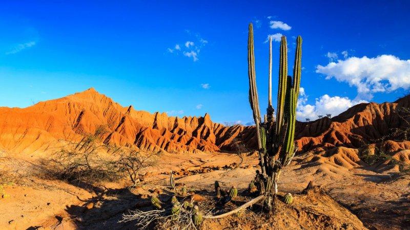 Cacto no Deserto Tatacoa na Colômbia